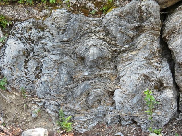 Close up of the stomatolites