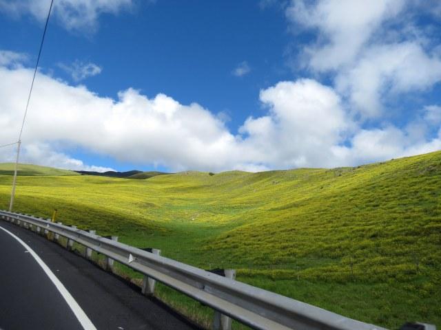 Kohala Mountain Rd