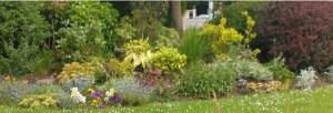 Flowers in Balally Estate