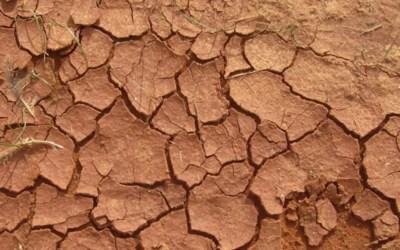 Suelo Arcilloso: características, qué cultivar y cómo mejorar este suelo
