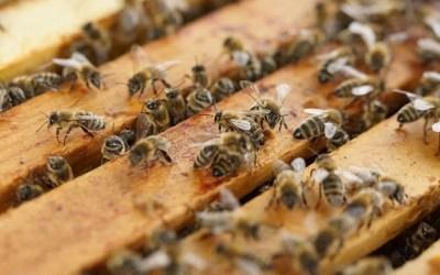Los productos fitosanitarios y las abejas