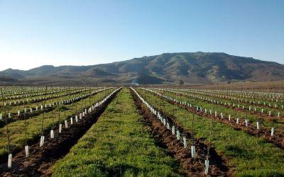 Este verano aprovecha el tiempo libre y aprende más sobre plantaciones de olivar