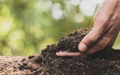 Importancia del pH del suelo en la agricultura