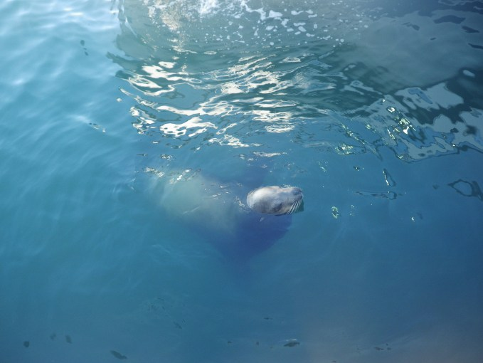 Dolphin Watching sea lion
