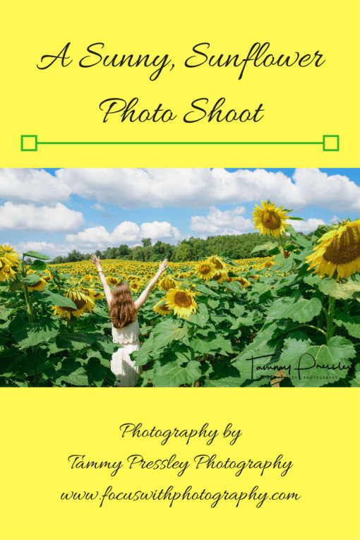 sunflower photo shoot post