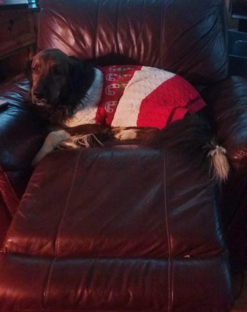 large dog christmas costume sweater