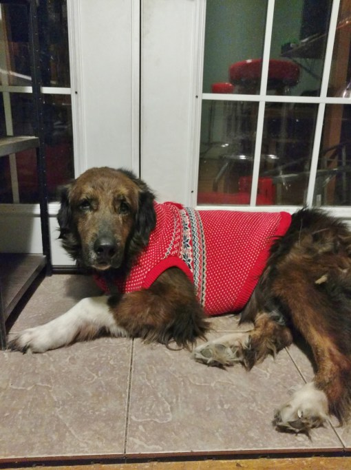 christmas sweaters for large dogs