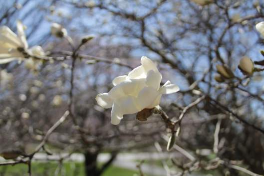 Spring 2018 photography