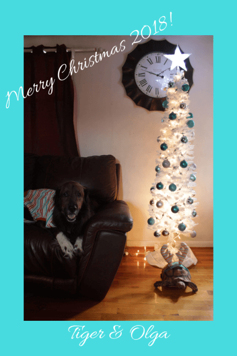 Merry Christmas 2018! holiday clothing for pets