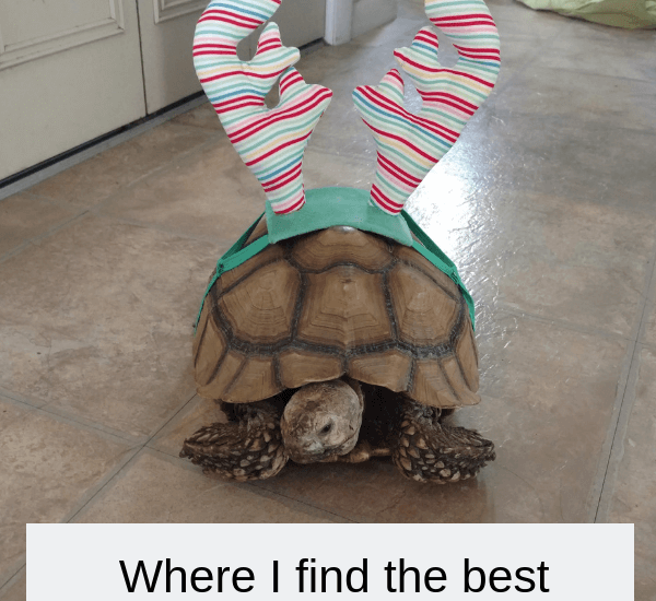 Where I find the best holiday clothing for pets