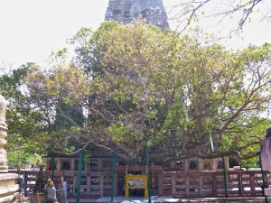This is the place that is believed to be where Siddhartha found enlightenment.