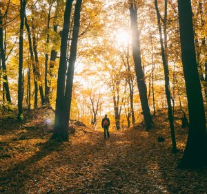 A man is shown hiking in a forest during fall time. The sun is shining and leaves are on the ground. He is enjoying the benefits of unplugging in nature.