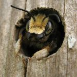 6 Natural Remedies for Treating Bee Stings