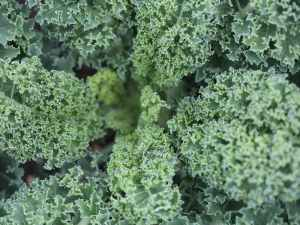 how-to-sneak-kale-into-your-diet
