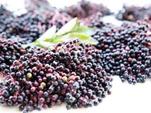 benefits-of-elderberry