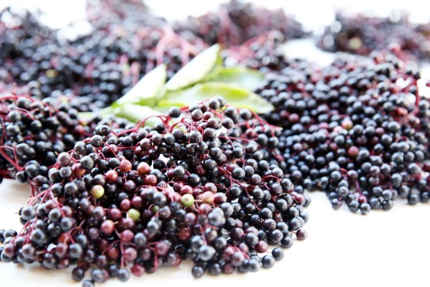 benefits-of-elderberry
