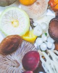 6 Medicinal Mushrooms That Boost Immunity, Digestion, and Help Combat Aging.