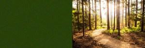Woodland Path at sun set