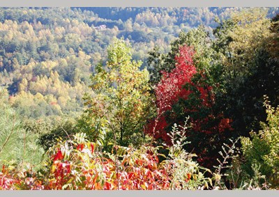 More Fall Foliage Photos (Gallery)