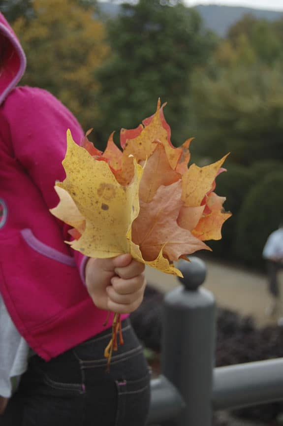 leafholding