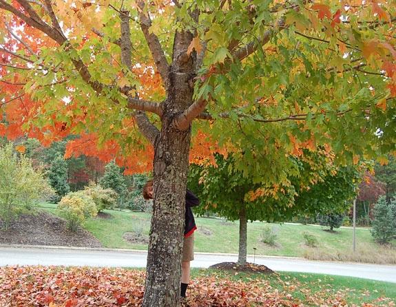 leaves_8