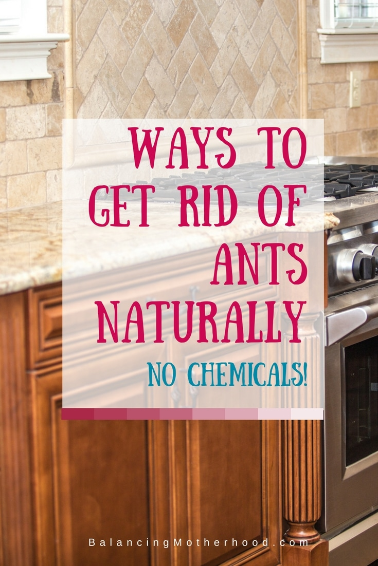 ways to get rid of ants without chemicals