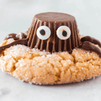 chocolate spider on cookie