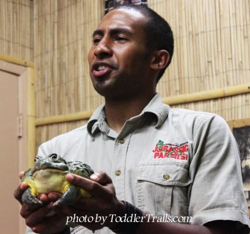 The Reptile Zoo's Jabba