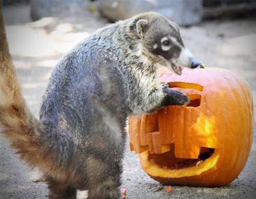 Orange County Zoo, OC Parks, Boo at The Zoo