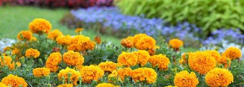 Armstrong Garden Centers, Free Event
