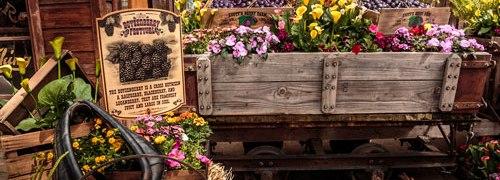 Knotts Spring, Boysenberry Festival, Knott's Berry Blume