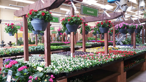 Amazing Orchard Supply Garden Center