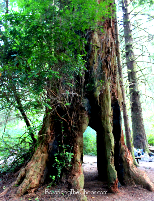 Mystic Forest RV Park & Campground, Giant Redwood Tree arch