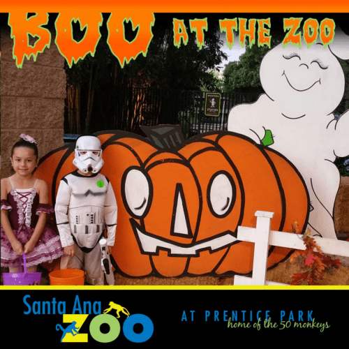 Boo at the Santa Ana Zoo with pumpkin