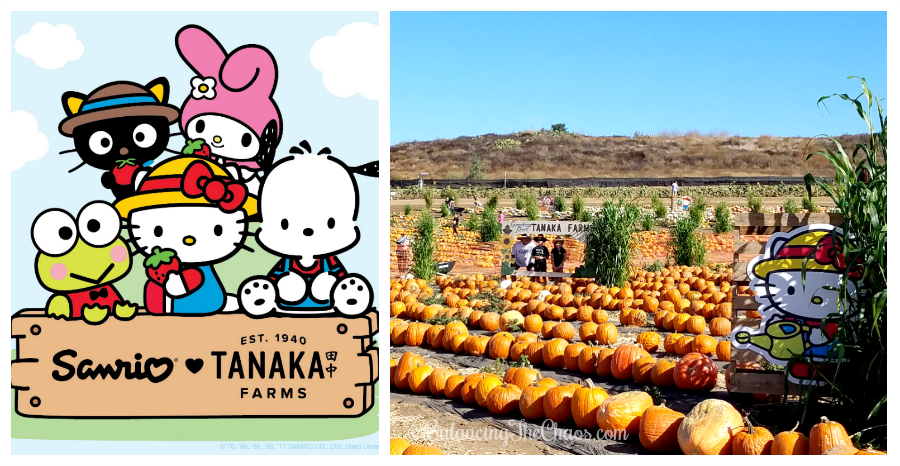 Hello Kitty Arrives at Tanaka Farms | @TanakaFarms #HelloKitty #TanakaFarms