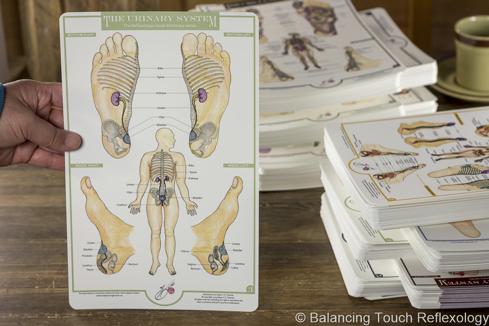 urinary system reflexology foot chart