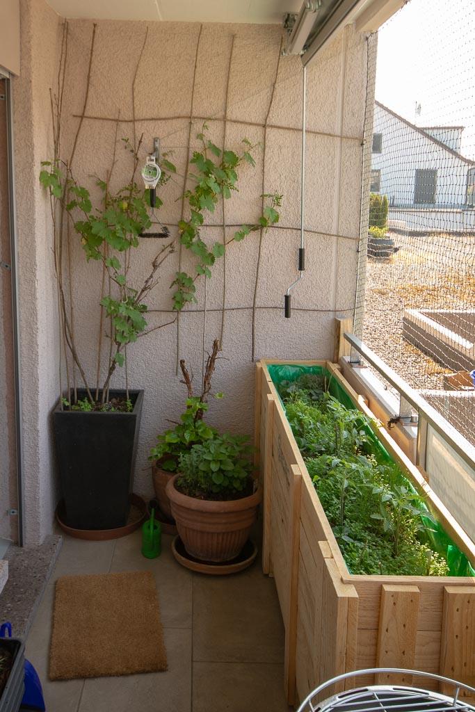 Balkonplanung wird umgesetzt: balconybotanista Kiste 2 mit Kräutern und Tomaten