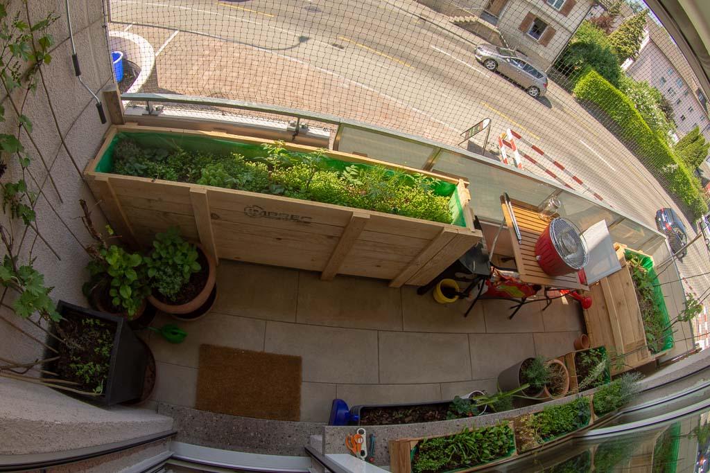 Balkonplanung umgesetzt: balconybotanista Balkon mit Salatbar, Weinreben, Heilzwiebel (Zwiebel mit dem riesigen, weissen Blütenstand), Rosmarin und Tomatenkiste.