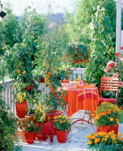Growing Tomatoes on a Balcony