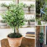 12 Diy Container Topiary Ideas To Beautify Your Home Balcony Garden Web