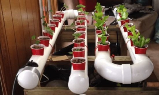 Strawberry Hydroponics Drip Vertical