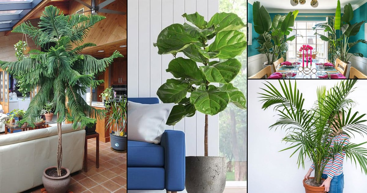 26 Best Large Indoor Plants for Home Offices2