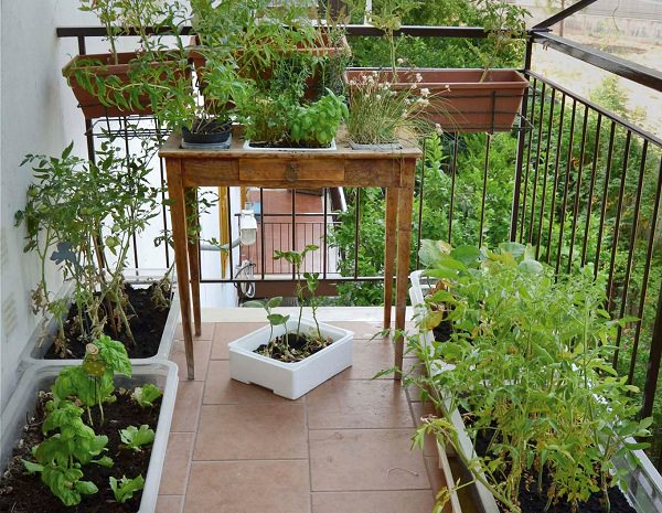 Hanging Plants Inside House