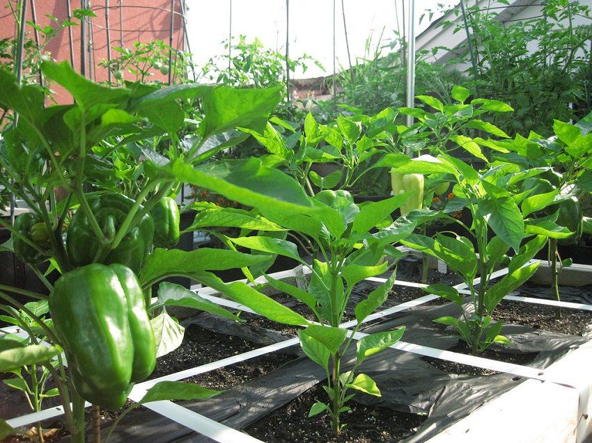 How To Make Terrace Vegetable Garden Complete Tutorial