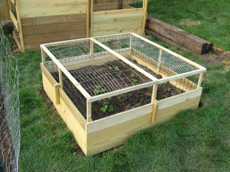 Vegetables Raised Beds Best