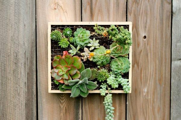 Hanging Plants Indoors Sale