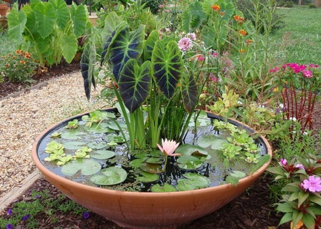 Garden Patio Design Ideas