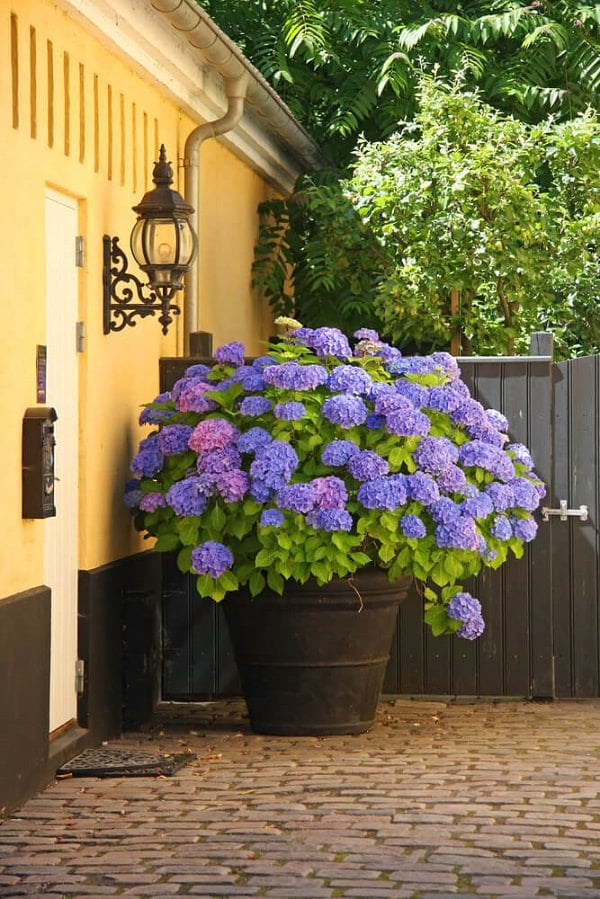 Growing Vegetables Pots Balcony