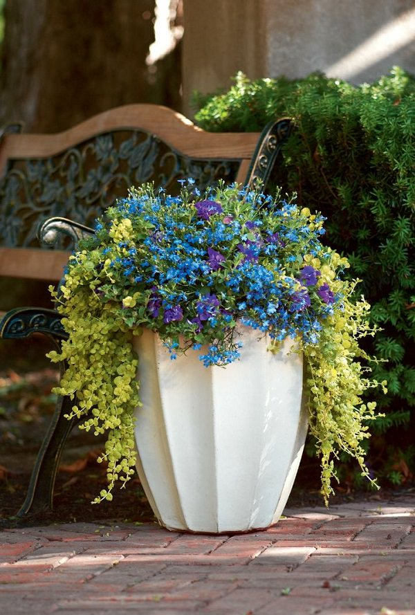 Shade Tolerant Annual Flowers