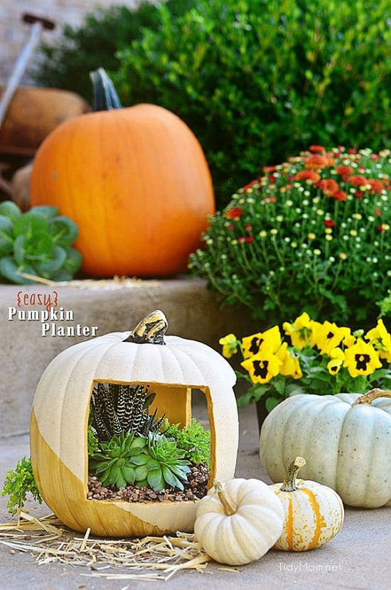 Outdoor Pumpkin Planter